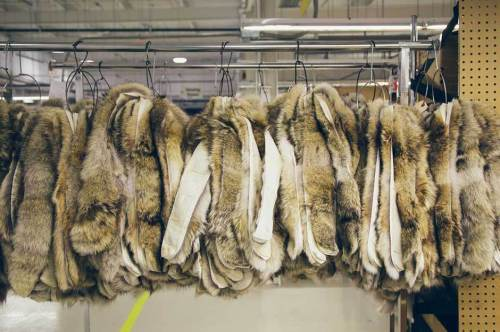 canada-goose-gives-a-behind-the-scenes-look-at-how-it-keeps-people-warm-3